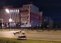 «Собачий патруль» на улице напугал жителей Нового Уренгоя