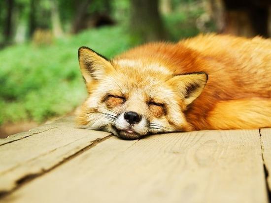 Эксперты назвали верный способ заснуть за две минуты