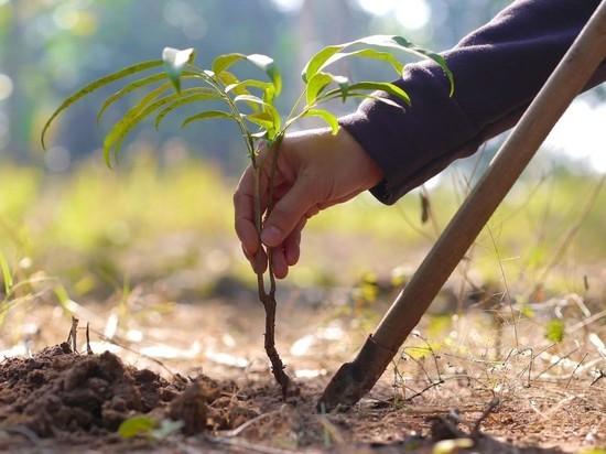 Ярославские депутаты снова будут сажать деревья