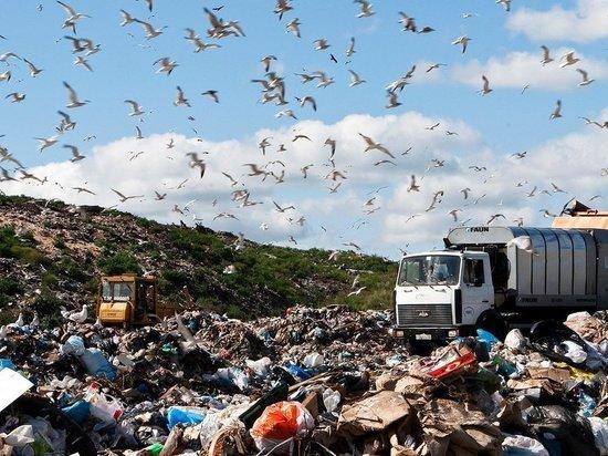 Предприниматели региона разбираются с мусорной реформой