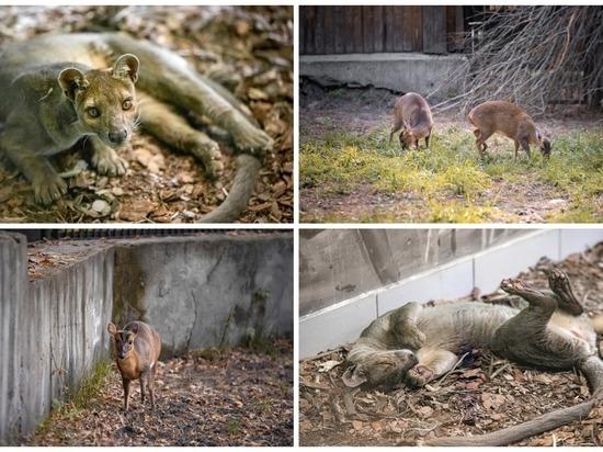 В Новосибирском зоопарке новое масштабное пополнение коллекции