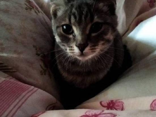 Жевал поролон, чтобы выжить: в Барнауле хозяин на неделю бросил котенка в запертой квартире
