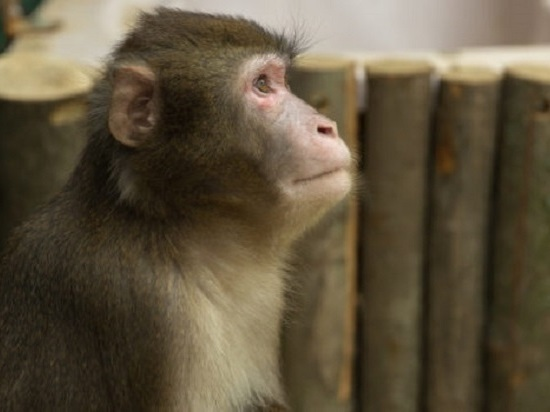 В Симферополе обитатели зооуголка переселяются в новые условия