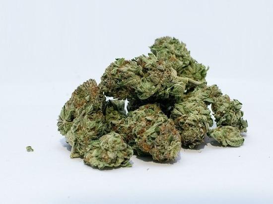 Орловской области марихуана семена конопли купит киев