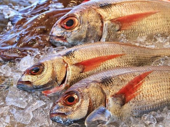 Как правильно выбирать рыбу: Росстандарт разработал новый ГОСТ