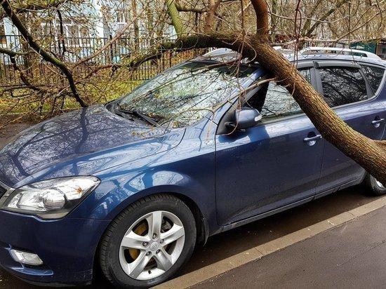 ВС разъяснил, когда хозяин упавшего дерева не должен платить за ущерб
