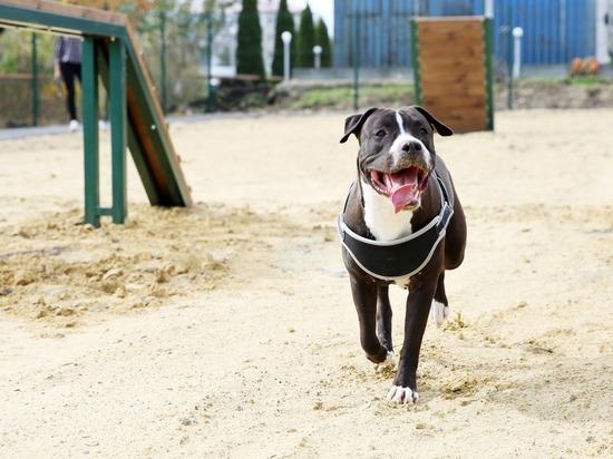 В Ставрополе открылись все три площадки для выгула собак
