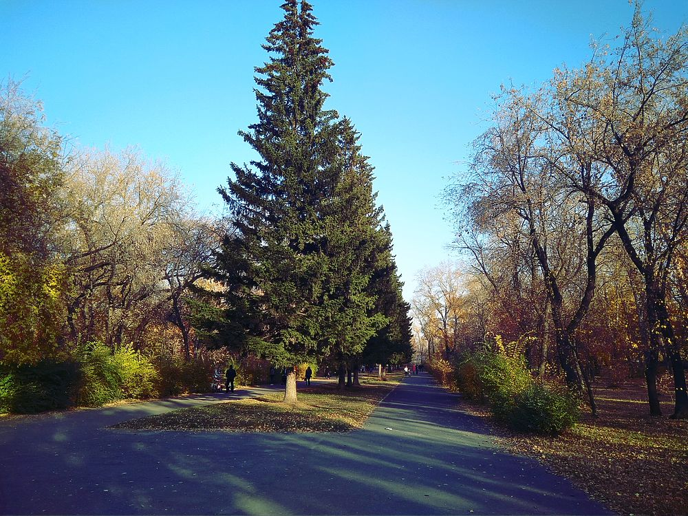 Дендрарий барнаул фото новогоднюю елку