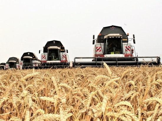 Этот год принес Хакасии самую высокую урожайность зерновых за 10 лет