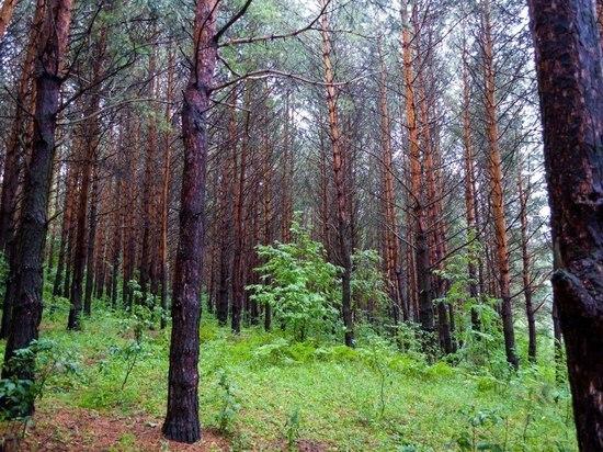 В Башкирии для сохранения лесов разработают приложение «Лесная карта»