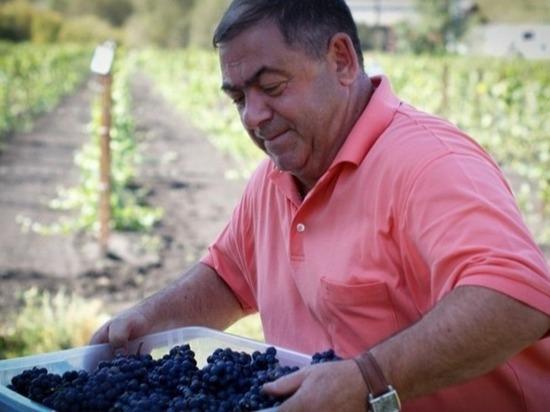 Известного алтайского винодела хотят признать банкротом