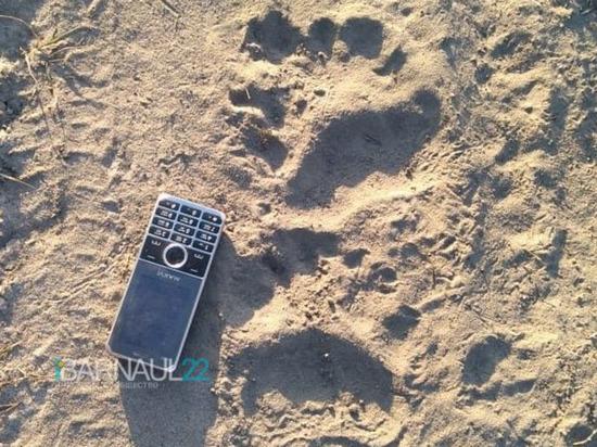 Недалеко от Барнаула обнаружили следы медведей