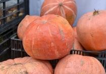 В Прикамье появится онлайн-платформа сельхозярмарок с функцией предварительного заказа