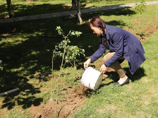 Могут ли волгоградцы сажать деревья во дворе дома