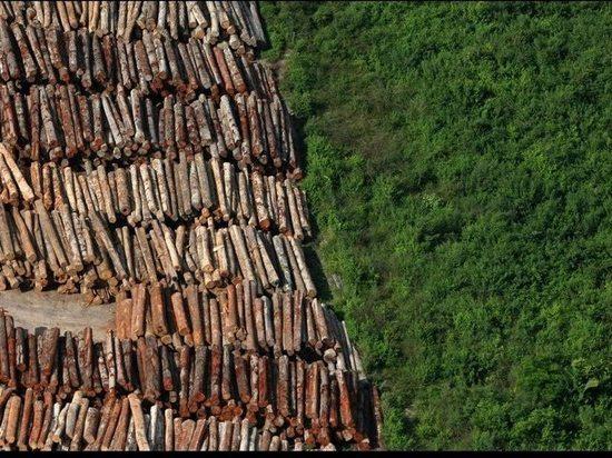 В Хакасии продолжается незаконная рубка леса несмотря на принимаемые меры