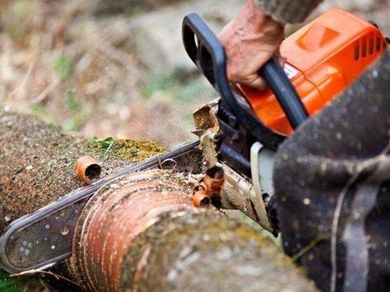 Дело о незаконной рубке леса завели в Савинском районе