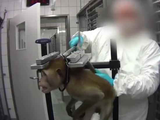 В Германии найдена лаборатория, где ставили «чудовищные» опыты на животных