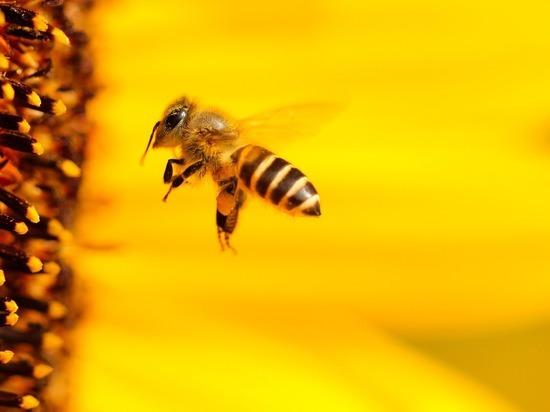 Пчелы справились с математическим заданием, затруднительным для людей