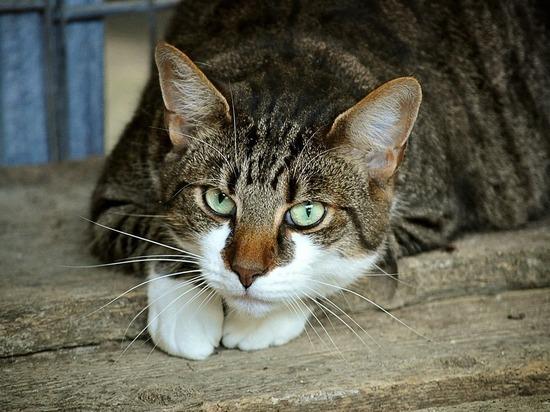 В Тульской области сбежал кот-наркокурьер
