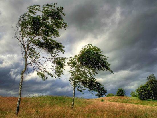 Завтра Хакасию ожидает штормовой ветер