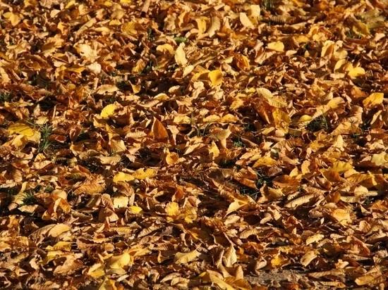 Жителям Барнаула предлагают сдать осеннюю листву на полигон