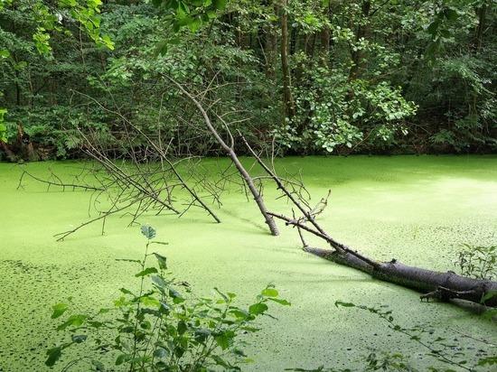 Глобальное потепление сделало озера красивыми и ядовитыми