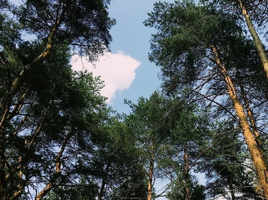 56 человек получили землю по программе «Вологодский гектар»