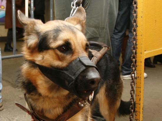 Кинологи научат водителей такси общаться с собаками-поводырями