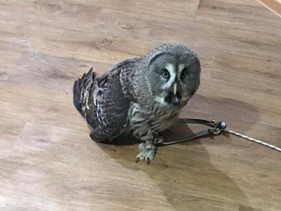 Редкую птицу без документов нашли в контактном зоопарке в Петербурге