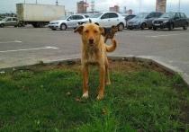 Тульских почтальонов вооружат против собак