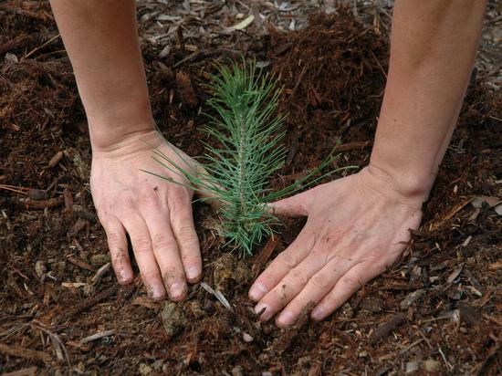 За день в Воронеже восстановили 10 гектаров леса