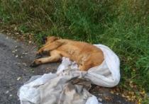Лже-ветеринар выбросила мертвую собаку, решив сэкономить на кремации