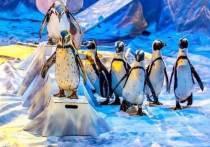 В Ярославле покажут единственное в мире цирковое шоу пингвинов