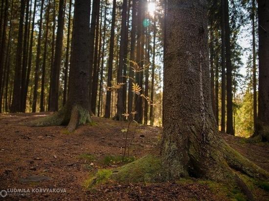 Полиция просит волонтеров помочь в поисках пропавшей в лесу женщины