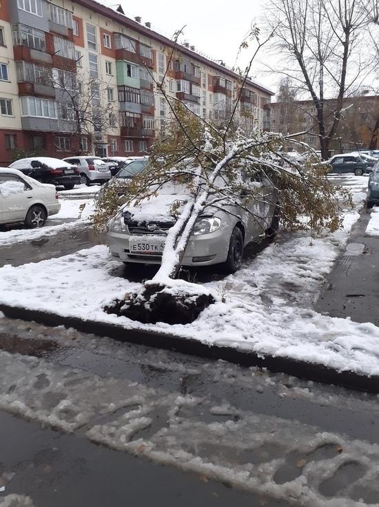 Первый снег обрушил деревья на авто в Бийске