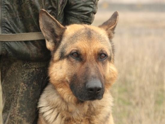 В волгоградский гарнизон заступили на службу караульные собаки