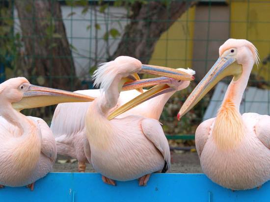 Животные барнаульского зоопарка готовятся к зиме