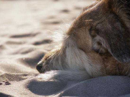 В Нижнекамске ветеринар отказалась помочь сбитой авто собаке