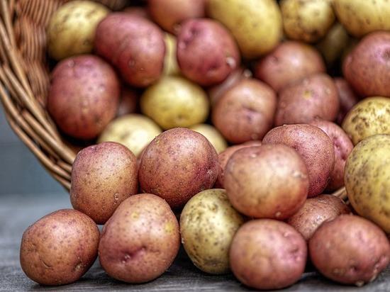 В Марий Эл более чем на треть подешевел картофель
