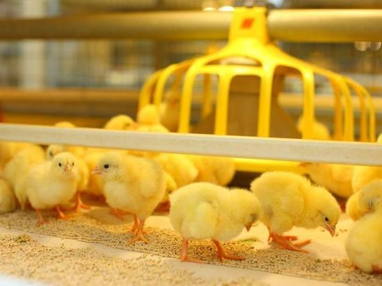 Больше 180 наименований продукции предлагает своим покупателям птицефабрика «ПРОДО Тюменский бройлер»