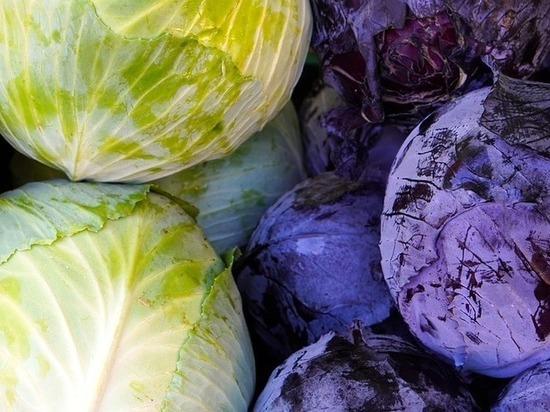 Почему врачи советуют есть капусту каждый день