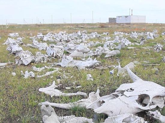 Многодетным орчанам предоставили под строительство кладбище домашних животных