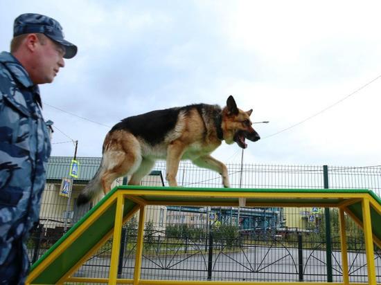 В Лабытнанги на площадке для выгула собак установят урны и фонари