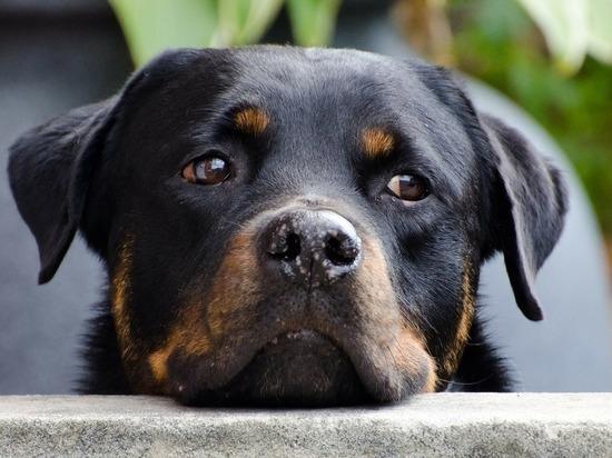 В Монастырщинском районе дачники уехали и бросили умирать собаку
