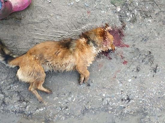 Правоохранители «не заметили» убийство собаки с целью досадить соседу на Кубани