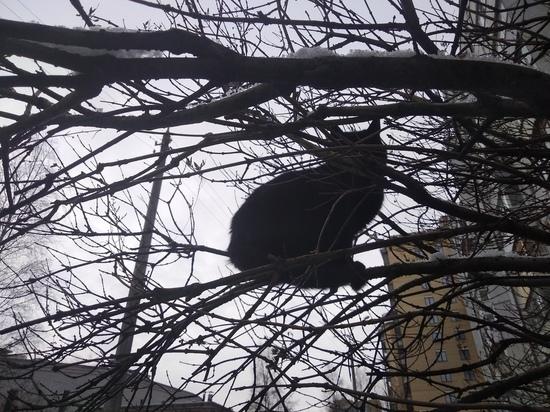 Гололёд в Архангельске растопит дождём – не слишком приятно, но менее травмоопасно