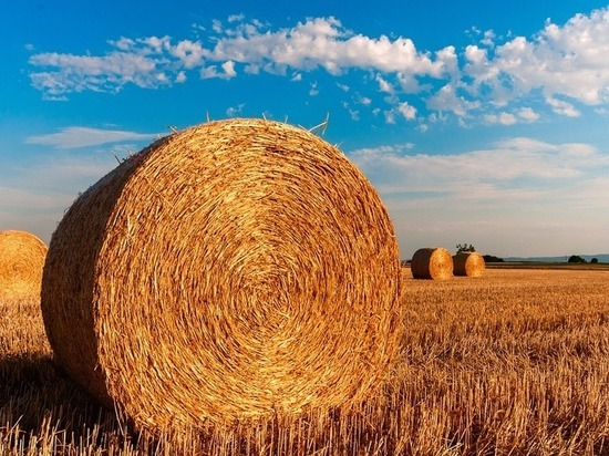 Тюменские аграрии вышли влидеры УрФО посельхозпроизводству