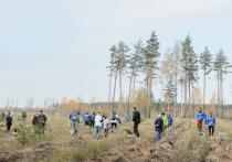 В Воронеже высадят 150 гектаров леса