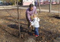 Рябины в «Старом Крыму»: в Воронеже продолжается благоустройство скверов