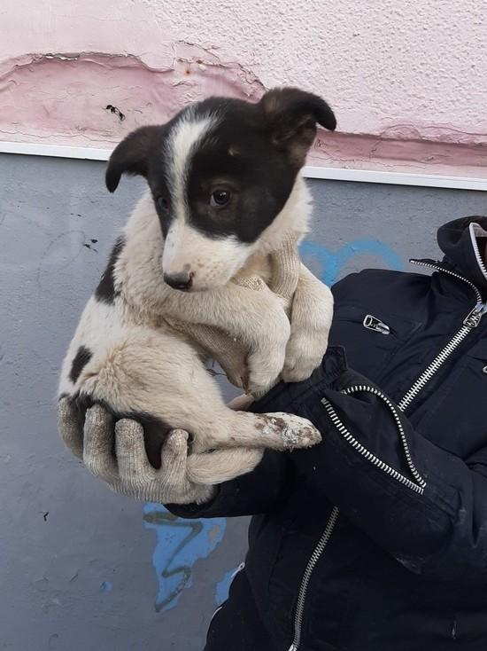 Из-под земли достали: в Ноябрьске спасли застрявшего под плитой щенка